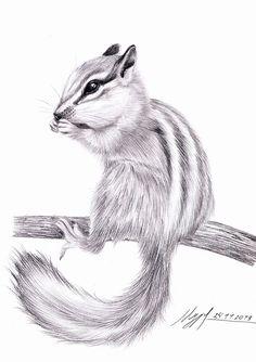 Realistic Animal Drawings, Pencil Drawings Of Animals, Animal Sketches, Cool Art Drawings, Art Drawings Sketches, Squirrel Art, Charcoal Art, Arte Disney, Animal Paintings