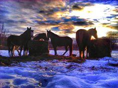 Winter Ponys