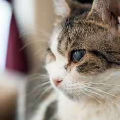 Natural Remedy for a Cat With a Cold in the Eye