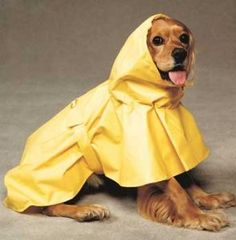 Amazon.com: Puddles Raincoat - Extra Small - Part #: 135YXS: Computers & Accessories