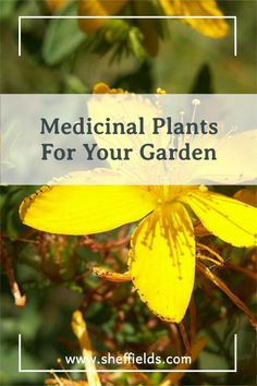 As people develop natural and healthy lifestyles, medicinal herbs are in more demand and herbs have become common plants in backyard gardens. #medicinalplants #medicinalherbs #growfromseed #seedplanting Garden Seeds, Planting Seeds, Garden Plants, Grass Seed, Garden Guide, Growing Seeds, Medicinal Plants, Good Advice, Vegetable Garden