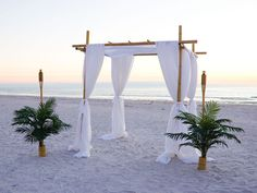 of Our Bamboo Canopy Arch in the Tampa Bay Florida Area Note Palm Trees