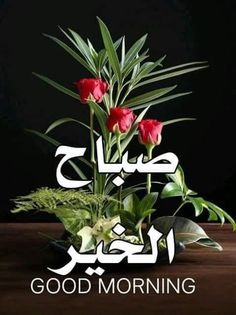 Good Morning Arabic, Good Morning Images, Romantic Love Quotes, Love Images, Flowers, Nature, Plants, Lionel Messi, Korean Food