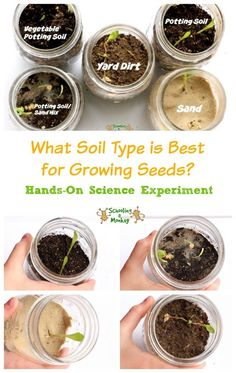 Seed Sprouting Science Experiment What soil is best for seeds? In this simple STEM activity for kids, learn how to identify the best type of soil in this seed sprouting science experiment. Ag Science, Science Activities For Kids, Science Classroom, Science Lessons, Stem Activities, Science Ideas, Science Crafts, Nature Activities, Forensic Science