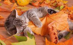 Equinozio settembre 2012: le più belle foto di gatti in autunno