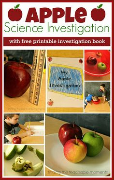 Apple Science Investigation with free printable from Finding the Teachable Moments