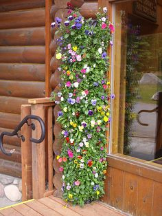 Beautiful vertical pansy planter. Great for small spaces or a patio & balcony.... Kenai Princess Wilderness Lodge, Cooper Landing. Photo by Ashley Harper