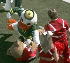 Duck vs Cougar