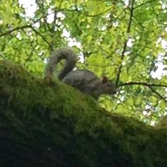 Squirrel at Lake Sacajawea