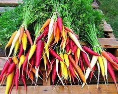 Mini Collection végétale, 6 légumes nain, jardin de récipient, jardin, été vente, chouette cadeau, petites tomates, aubergines, carottes