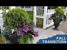 Planting Some Fall Containers // Garden Answer - YouTube    Beautiful fall / winter container with perennials. Love those purple leaves!!