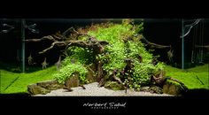 #Interview with Norbert Sabat : Norbert Sabat is well known aquascaper and photographer from Poland. Veteran hobbist, whose works inspired many aquascapers worldwide.