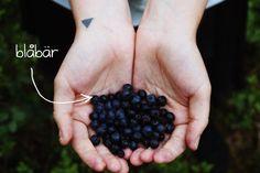 jedenáct koček - arogantní umňoukaná alternativa Blackberry, Fruit, Food, Essen, Blackberries, Meals, Yemek, Rich Brunette, Eten