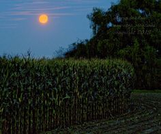 children of the harvest moon