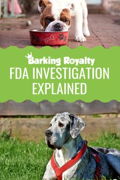 What are the dog food brands you should avoid? All the things you should know about the FDA investigation in one place. Best Cheap Dog Food, Best Dog Food, Dry Dog Food, Best Dogs, Salmon And Sweet Potato, Sweet Potatoes For Dogs, Grain Free Dog Food, Dog Nutrition