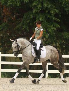 Активное движение лошади вперед