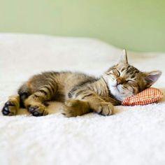 Sleeping cutie:)