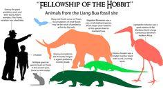 Episode 10 Field Guide: The Hobbit - An Unexpected Discovery - Past Time Paleo Extinct Birds, Extinct Animals, Prehistoric Wildlife, Prehistoric Creatures, Elephant Species, Animal Species, Ground Sloth, Small Elephant, Dinosaur Fossils