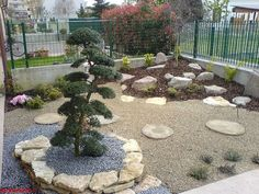 small yards landscape design with bonsai tree
