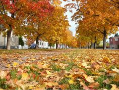Autumn colours at Pori, Finland Endless Night, Autumn Colours, Finland, Vineyard, Scenery, Orange, Landscape, Country, Outdoor