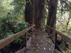 1. Prairie Creek Redwoods State Park