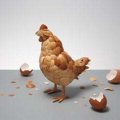 skorupkowa kura