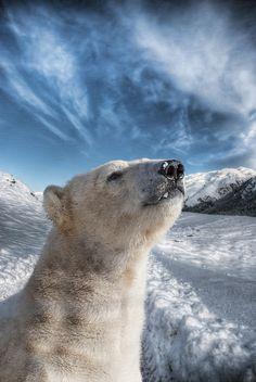 Meet Walker the Polar Bear