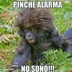 Hooooo me levante tarde!!