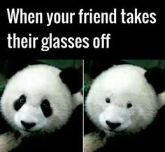 Lol what it's like when your friend takes their glasses off... Pic of a couple panda bears...