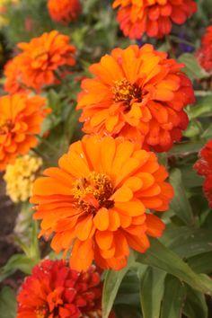 ;) Marigold, Scenery, Shots, Nature, Plants, Naturaleza, Landscape, Plant, Paisajes