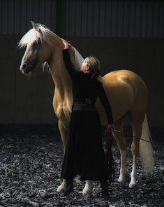 gorgeous palomino stallion beside a black dress.