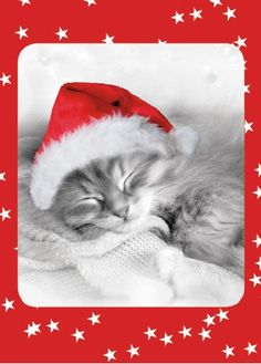 Cute Kitten Christmas Cards.  #christmascats #catlovers