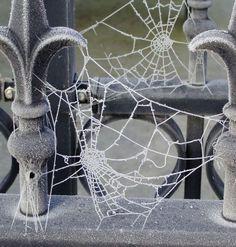 Frozen webs by  hilleke at http://www.pxleyes.com/profile/hilleke/