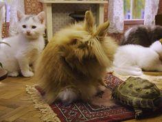 Fluffy Fleur, de ex-vriendin van Ed komt op bezoek ...  poesjes, kattenlaan 9, butler ed, ed, schildpad, konijn, fluffy fleur, lotje, kaat, django, kitten, kat, poes, vpro, studio 100, kittens, kattenlaan