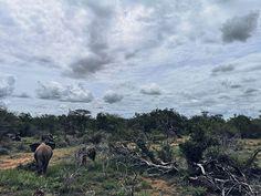 Da waren sie auch schon wieder um meine Zeit im Kruger.  Es war einfach ganz unglaublich dort  so ein bisschen sprachlos bin ich immer noch. Wir hatten so viele großartige Tierbegegnungen einschließlich der Big 5 einem Geparden Hyänen und Wildhunden. Unfassbar! Smartphone Fotografie, Wanderlust, Mountains, Instagram, Nature, Travel, Simple, Wild Dogs, Animales