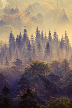 Morning Forest, Germany by David Sausse