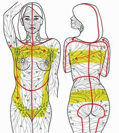 lymphatic system (with arrows!)   Come to Fulcher's Therapeutic Massage in Imlay City, MI and Lapeer, MI for all of your massage needs! Call (810) 724-0996 or (810) 664-8852 respectively for more information or visit our website lapeermassage.com!