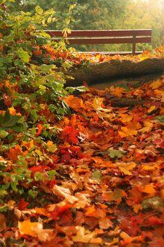"Autumn Wonderland - 14 Photos of ""I walked on Paths of Crisp Autumn leaves"""