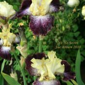 At Schreiner's Iris Gardens, Oregon.
