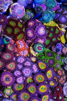 Under the Sea: Crazy colored soft coral/Zoanthids. Totally thought this was a granny square quilt.  http://what-do-animals-eat.com/coral/