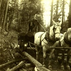 Hauling logs near Columbia Center :: Garfield County Heritage