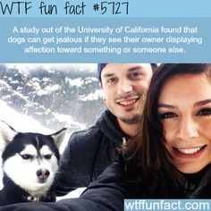 Dogs can get jealous! - WTF fun facts