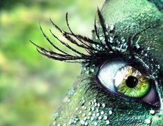 peacock lash - Pixdaus