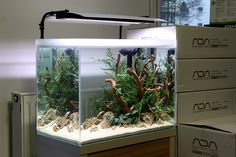 client tank by Oleg Foht Very nice new layout. Surely this will get a beautiful growth.