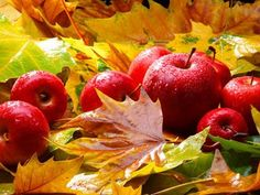 """Autumn is the mellower season, and what we lose in flowers we more than gain in fruits.""  Samuel Butler"