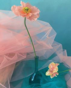 One of the many inspiring images of flower arrangements in The Green Gallery Issue Floraissance. Still Life Photography, Color Photography, Pink Flowers, Beautiful Flowers, Purple Roses, Pixiv Fantasia, Bokeh, Portrait, Oeuvre D'art