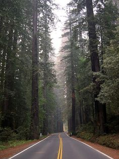 sequoia sempervirens - Google Search
