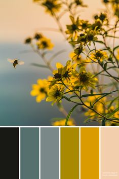 Bee Floral Color Palette Inspiration Yellow Color Palette For the Home Wedding Colors Paint Colors Scrapbooking Ideas DIY Crafts Colour Pallette, Color Palate, Colour Schemes, Color Combos, Color Harmony, Design Seeds, Color Swatches, Grafik Design, Color Theory