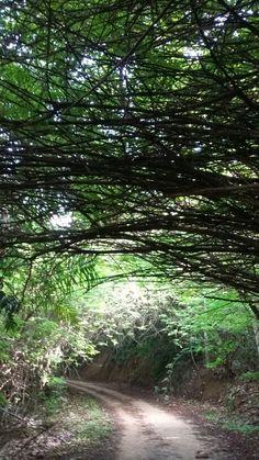 Tuneo Verde