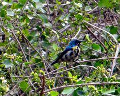 Friendly Neighbourhood Birders: Trip to Keoladeo Ghana National Park, Bharatpur Pa...